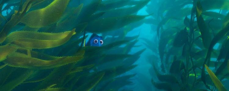 Le Monde de Dory - Pixar (2)